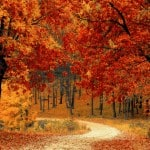 Spotlight on Promotional Products: Autumn Options